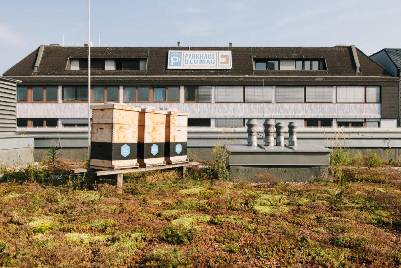 Grünflächen in der Stadt fördern das Überleben von Bienen