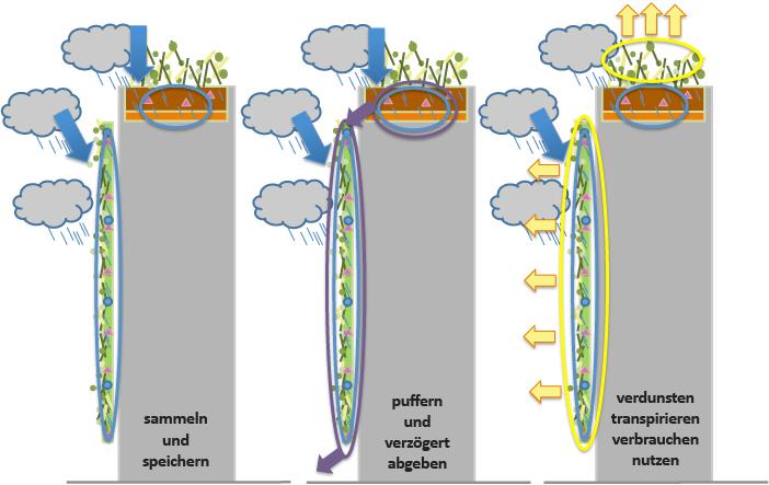 Grünflächen in der Stadt wirken der Hitze im Sommer entgegen und sind ein effektives Regenwassermanagement.