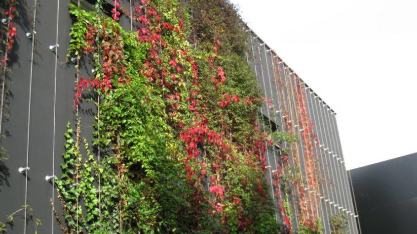 Grüne Klima-Anlagen in der Stadt.